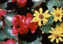 fleur05