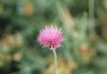 fleur09
